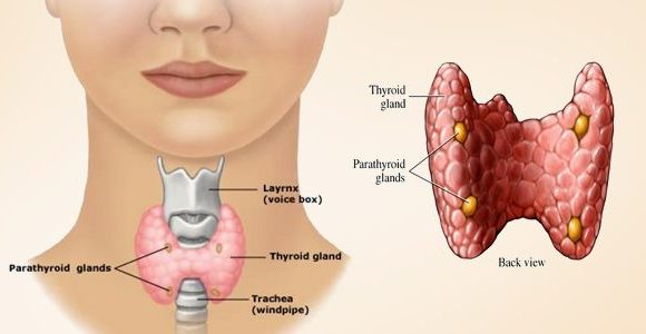 Mild Low Thyroid Levels May Affect a Woman's Fertility – Natural Thyroid Supplement