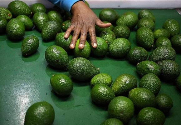 How the avocado can can help you lose weight, cut cholesterol